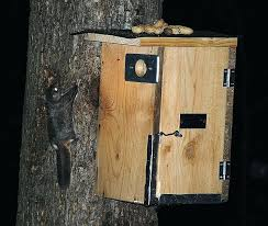 squirrel house plans. building a squirrel house flying plans lovely squirrels gliders of the night