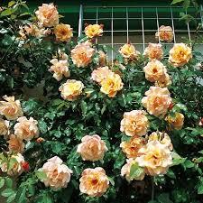 Розы в Минске! Личная коллекция! : 474 Moonlight | Floral wreath ...