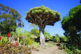 san go botanic garden encinitas calif