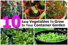 best garden vegetables. Container Vegetable Gardening In Florida Best Garden Vegetables To Grow Idea North