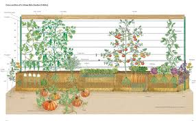 a foolproof vegetable plot