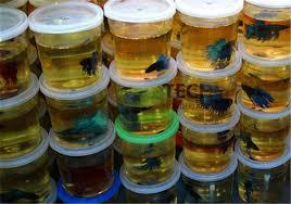10PCS High Quality Betta House Mini Fighting Betta Fish Tank Aquarium (Fish  Not Included)