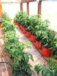 bucket gardening. 5 Gallon Bucket Gardening Grow Buckets Soil R