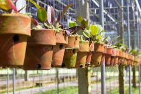 Download Hanging clay pots stock photo. Image of growth, garden - 32615592