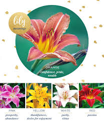 lily meaning and symbolism ftd com