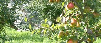 Benefits Of Pruning Fruit TreesPrune Fruit Tree