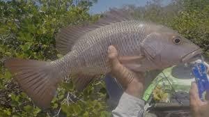 Resultado de imagen para Mangrove Fishing