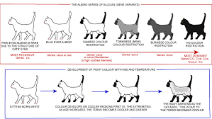 Cat Coat Color Chart Colour And Pattern Charts