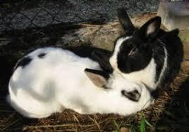 Adozioni - Coppie - Charly e Iris - La Collina dei Conigli -