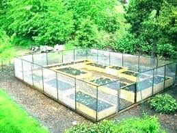 raised beds vegetable garden pictures