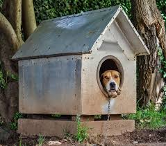 the market also offers a handful of metal outdoor dog houses but we wouldn t recommend these as they get too hot in the summer and too cold in the winter