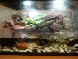 had to rearrange my fish tank terrarium waterfall with tetras guppies and a dwarf african water frog
