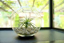 An Urban Air Plant Garden from ProPlants