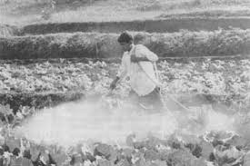 the green revolution in the punjab spraying pesticides in