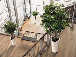 nice office design. Modern Contemporary Office Interior Style With Wooden Flooring And Nice  Plants Nice Office Design E