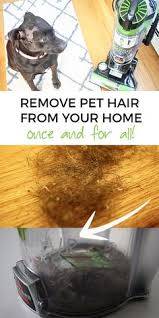 remove pet hair my journey to a cleaner home