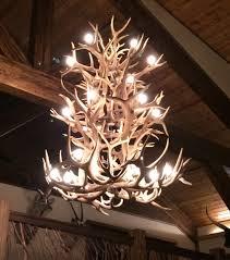 real antler elk whitetail mule deer chandelier ewtmd3tr