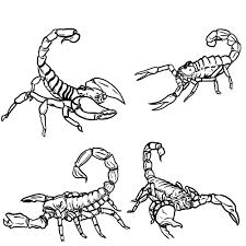 Small Picture Free Printable Scorpion Coloring Pages For Kids