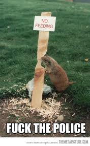 funny beaver eating wood - Funny Pics Funny Images Funny Quotes