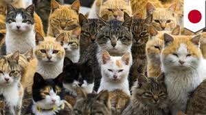 hundreds of cats. Simple Cats Cat Island Feral Cats Overrun Japanu0027s Aoshima Island Outnumbering Humans  6to1 To Hundreds Of Cats I