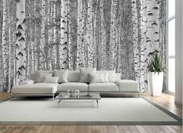 birch tree forest black and white
