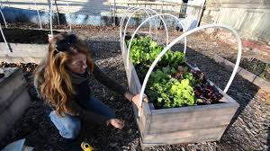 Small Picture Homegrown Winter gardening how to build your own greenhouse