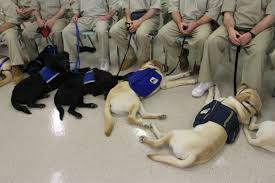 - Training Help Providencejournal Providence com Aci Service Handling Ri By Inmates Others With News Care Dogs