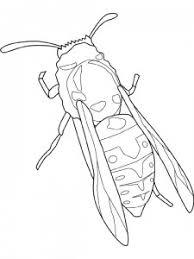 Kleurplaten Van Insecten Jouwkleurplaten