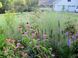 my delightful garden garden bloggers bloom day  coneflower liatris lemon queen sunflower