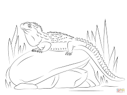 Small Picture Northern Tuatara Sitting on Stone coloring page Free Printable