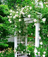 Small Picture A Great Rose Covered Entrance Liquidscapes