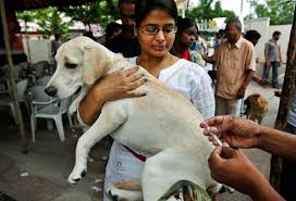 a plan to rid the world of rabies in humans through dogs a plan to rid the world of rabies in humans through dogs