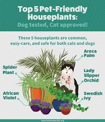 Houseplants Safe for Cats and Dogs | Fix.com