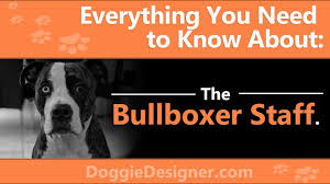 Bullboxer Size Chart The Bullboxer Staff A Complete Guide Doggie Designer
