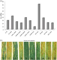 Mapping of stripe rust resistance gene in an Aegilops caudata ...