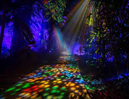 elation paints nightgarden at fairchild tropical botanic garden
