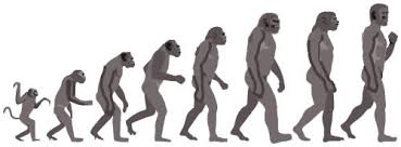 the origin of humans   answers in genesisape to man evolution