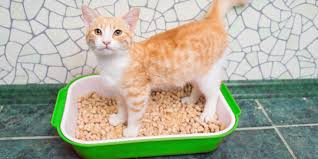 image cat litter.  Image Jackson Galaxy On The Benefits Of Natural Cat Litter  Worldu0027s Best  Blog Clearing Air Throughout Image