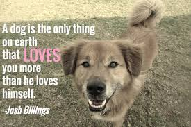 Quotes About Dogs Love Inspiration 48 Dog Quotes With Pictures