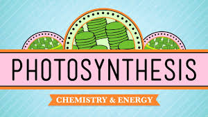 Chapter 8 Photosynthesis And Respiration Concept Mapping Venn Diagram Answers Sc 912 L 18 9 Photosynthesis And Cellular Respiration