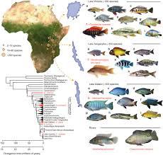 Cichlids Wholesale Indonesia Tropical Fish Aquarium Fish