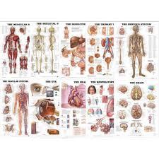 Body Chart Organs Of The Body Chart Bundle 10 Laminated Charts