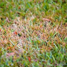 Identifying Lawn Diseases