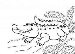 Small Picture Get This Printable Alligator Coloring Pages for Kids 5prtr