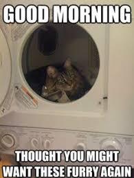 Cat memes on Pinterest | Funny Cat Memes, Funny Cats and Grumpy Cat via Relatably.com