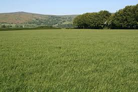 grass field. File:Grass Field - Geograph.org.uk 183289.jpg Grass S