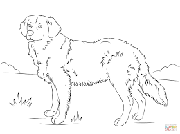 Small Picture Golden Retriever coloring page Free Printable Coloring Pages