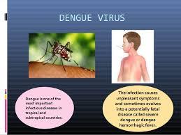 dengue feber essay dengue