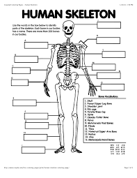 Small Picture Skeleton Body Coloring PagesBodyPrintable Coloring Pages Free