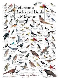 Warbler Id Chart Backyard Bird Identification Chart Birds Of The Acidmind Info
